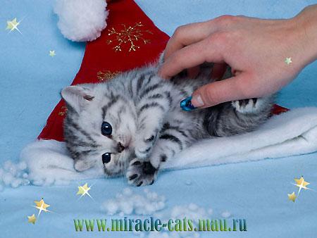 Купить котенка Продажа котят и кошек Фото и видео