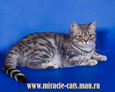 Пятнистая кошка