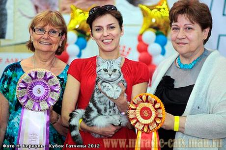 британские котята купить в омске фото #4