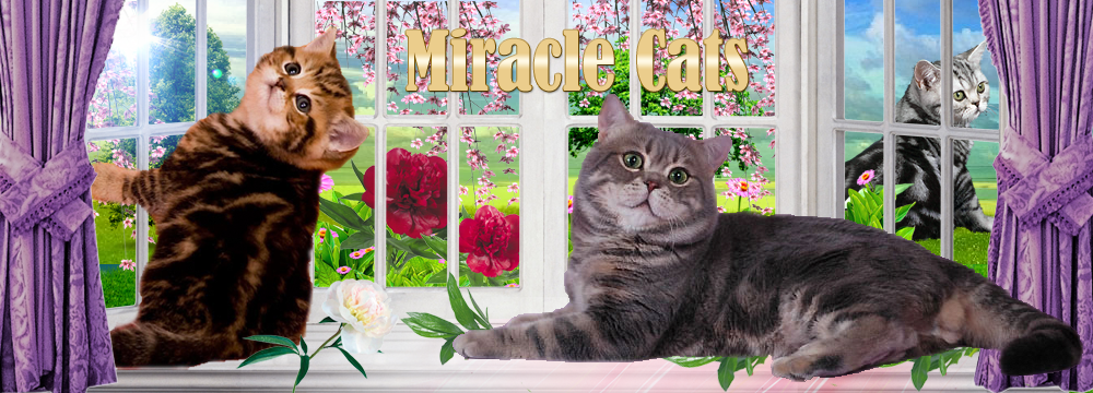 Cattery Miracle Cats
